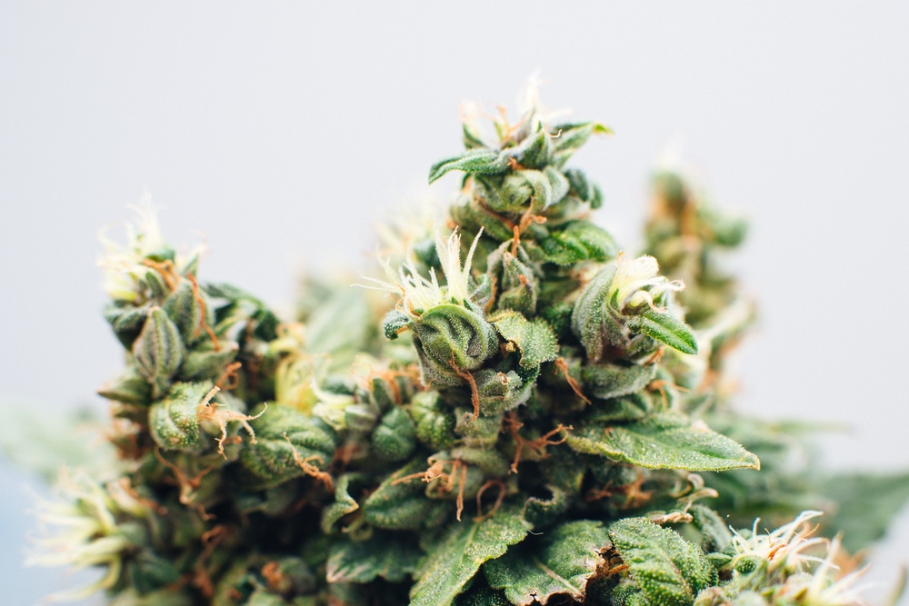 My Personal Experiences with the Medical Marijuana Business and the Opioid